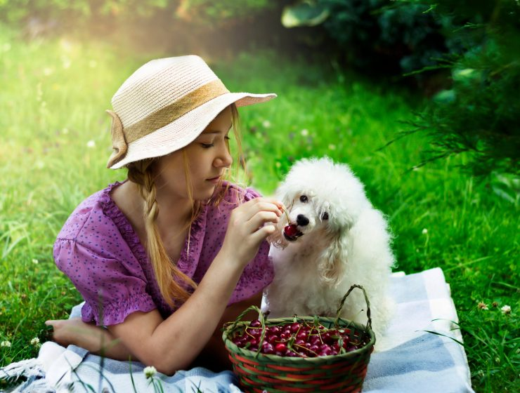 12 HUMAN FOODS YOU CAN GIVE TO YOUR DOGS-min