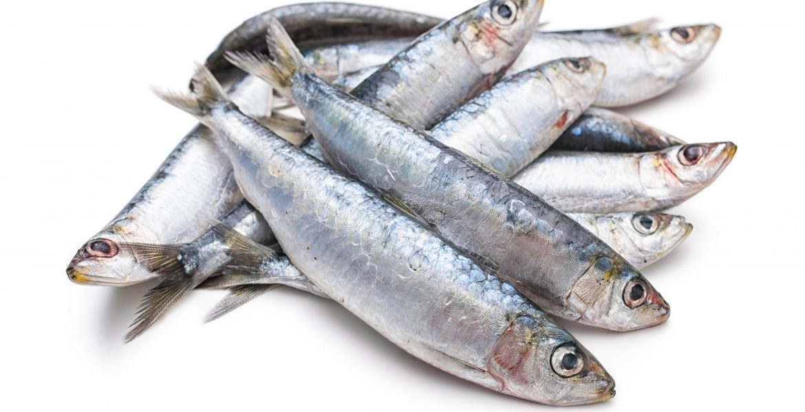 ARE SARDINES GOOD FOR YOU-min